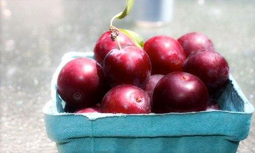 12winter_cranberries